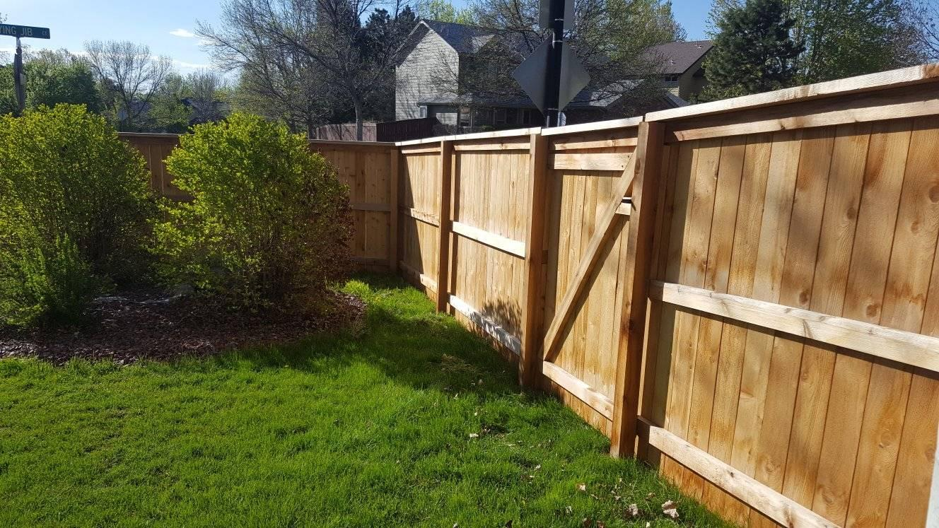 cedar fence in backyard
