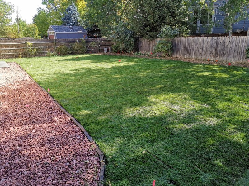 Backyard with sod installed