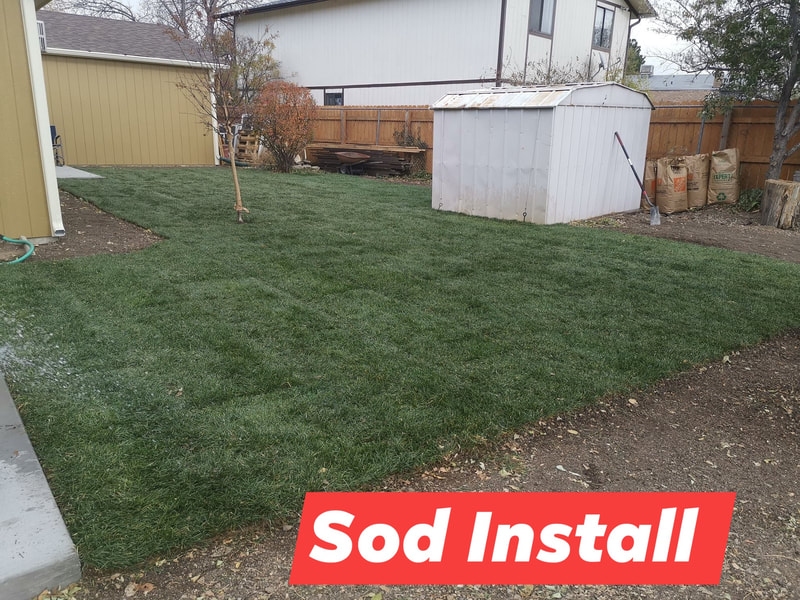 Freshly installed sod