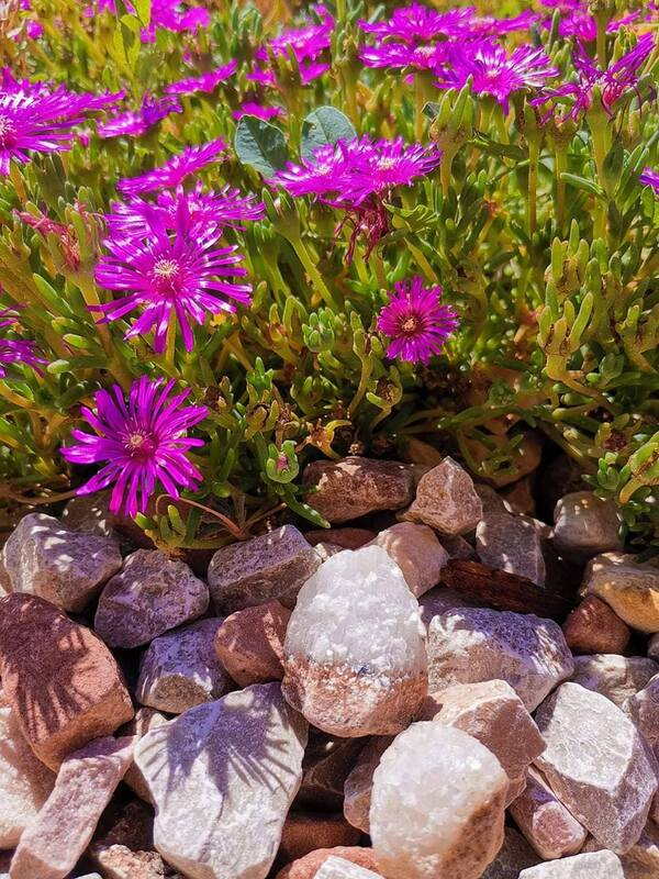 Decorative rock near flower beds